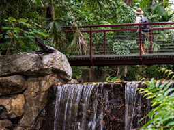 Turbocharging Tourism: $9.9 million boost for George Brown Darwin Botanic Gardens
